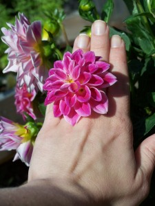 Just my beloved dahlias decorating my fingers today